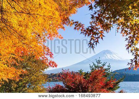 Fujisan and maple tree