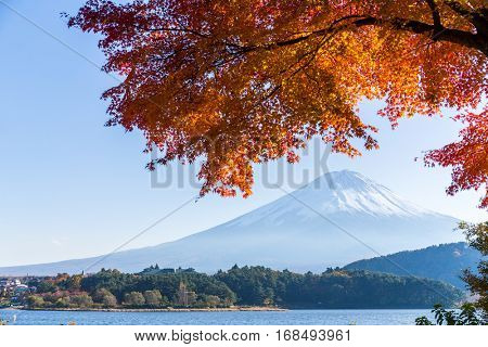 Fuji and maple tree in Lake Kawaguchi