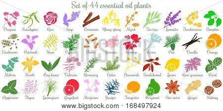 Big vector set of 44 flat style essential oil plants. Ylang-ylang, eucalyptus, jasmine, rose, cedar, lavenda, sandalwood, patchouli etc. For cosmetics, spa health care aromatherapy homeopathy Ayurveda