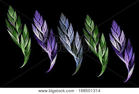 an abstract fractal leaf and a feather