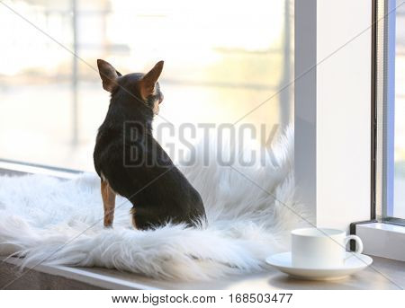 Cute funny dog sitting on window sill covered with plaid