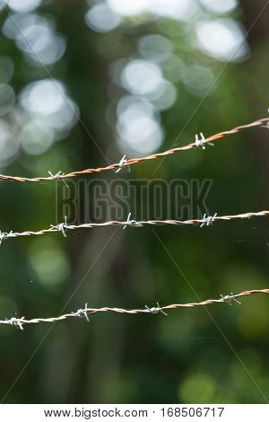 Barbed Wire Fence With Spider Webs