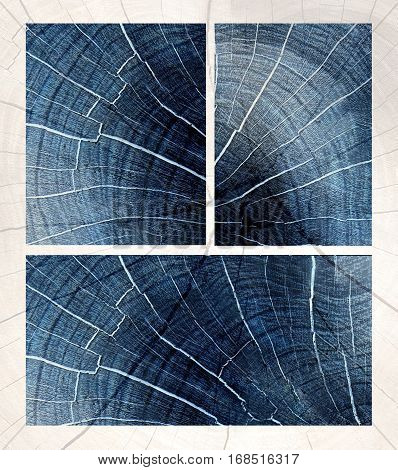Cross Section Of Tree Rings,wooden  Texture On A Black Background, The Negative Effect Of The Film
