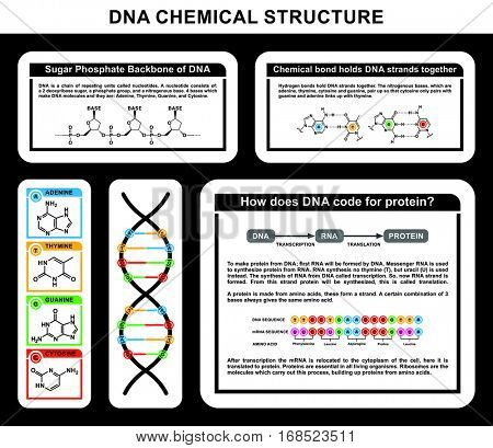 DNA Chemical Structure details of strands compounds adenine thymine guanine cytosine in human body cell genes genetic code nitrogen pair bases sugar phosphate backbone life chemistry
