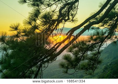 The evening sees the sun setting sun through the branches of a pine tree as a beautiful background.