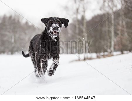 Black mutt dog outside in cold winter snow.