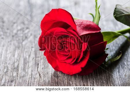 Red rose lying on a wooden table close up