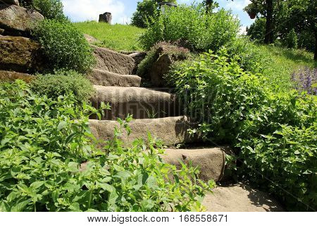 Garden composition with old sandstone stairs and aromatic herbs. Eco country garden.