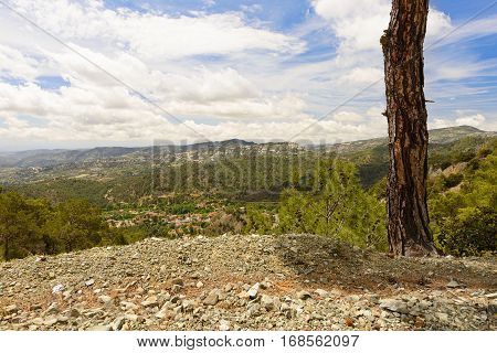 Troodos mountain woodland in cyprus summer day