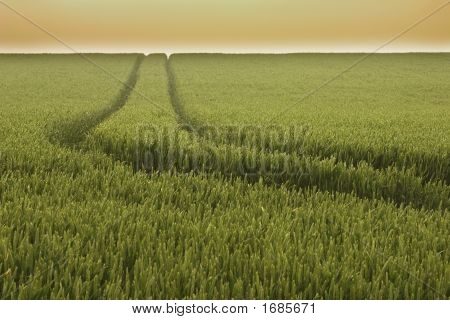 Track In Wheat Field