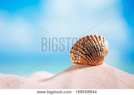golden tropical shell on white Florida beach sand under sun light, shallow dof