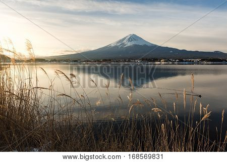 Mt. Fuji With Kawaguchiko Lake