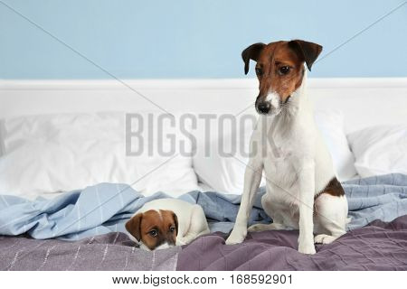 Cute dog with funny puppy on bed at home