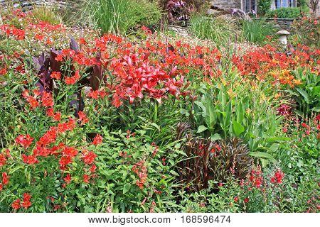Lilies flowering in a garden in summer