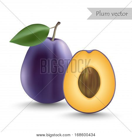 Plum vector isolated on white background. Half plum.