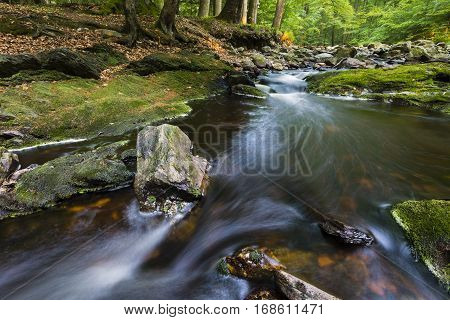 Forest Mountain Stream Rapids