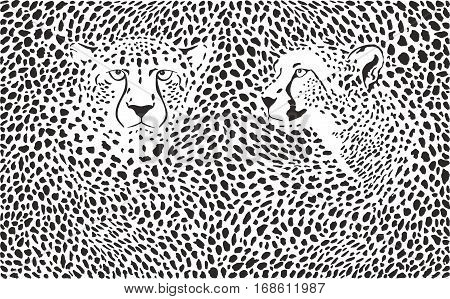 illustration background cheetah skins and with two heads