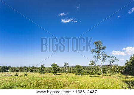Green Landscape In The High Fens, Belgium