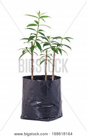 Tree Planting Isolated