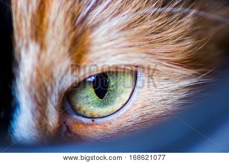 Cat eye.Macro shoot of a green cat eye