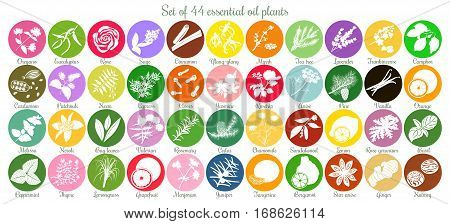 Big icon set of 44 popular essential oil labels. white silhouettes. Ylang-ylang, eucalyptus, jasmine, rose, sandalwood, patchouli etc. For cosmetics, spa, health care, aromatherapy homeopathy Ayurveda
