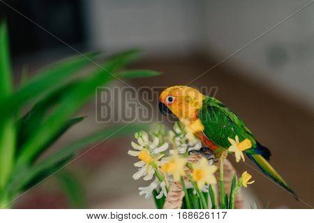 against the backdrop of green pine needles and toys sits a large parrot with a yellow head