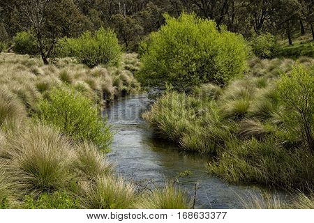 Little river near Victoria falls at Great alpine road, Australia