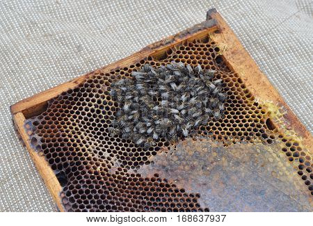 Bees starve to death in winter. Bees death