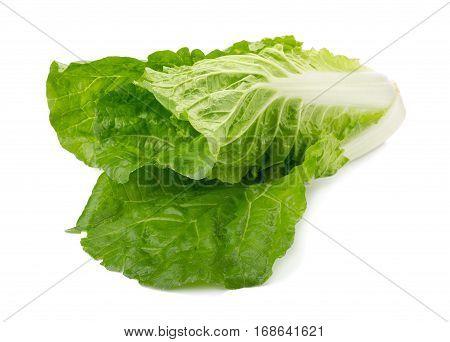fresh napa cabbage  vegetable on white background
