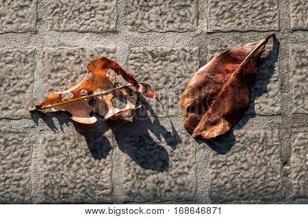Two orange color leaves falling on the floor