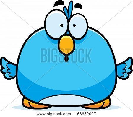 Surprised Little Bluebird