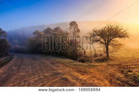 asphalt road in blue shade of a trees in mountainous rural area at foggy golden sunrise
