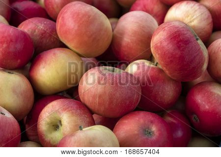 Freshly picked apples for sale at farmers market