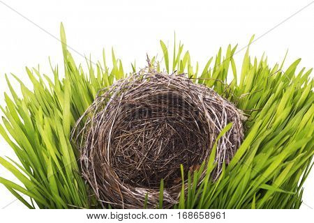 Empty nest in grass isolated on white background