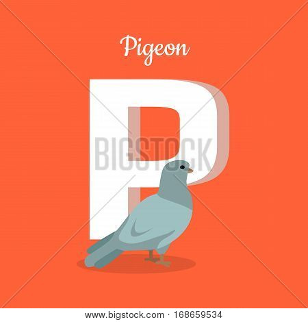 Animal alphabet vector concept. Flat style. Zoo ABC with domesticated bird. Grey pigeon standing on red background, letter P behind. Educational glossary. For children s books, textbooks illustrating