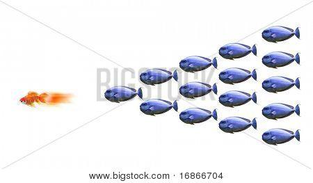 Shoal carnivorous fish and one little goldfish