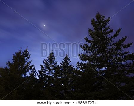 Pine trees silhouetted against a late sunset sky moon and star or planet glowing through hazy clouds