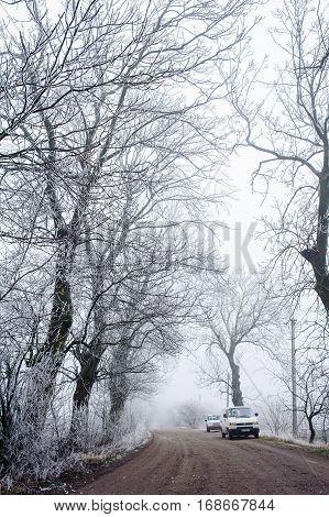Trees in misty haze in a gloomy winter day.
