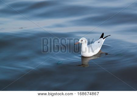 animal bird feather natural nature seabird seagull water wild wing