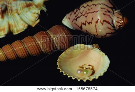 Pearls on the shell. Pearl earrings in a sea shell.