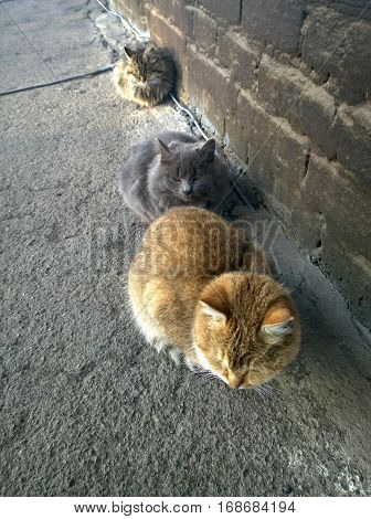 A few stray cats in cold weather at the wall of the house