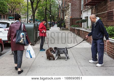 Dogs On The Streets Of Nyc