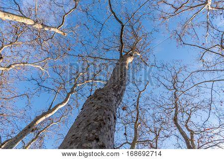 Tree in the sky, shot in Vitoria Gasteiz from Spain