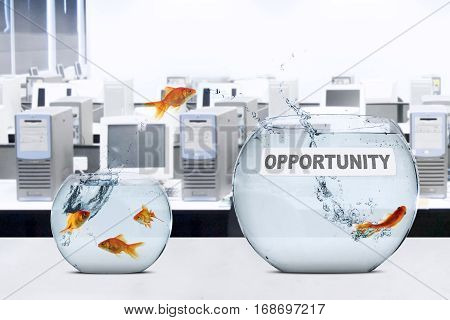 Picture of goldfish leaping to larger aquarium with opportunity text on the table