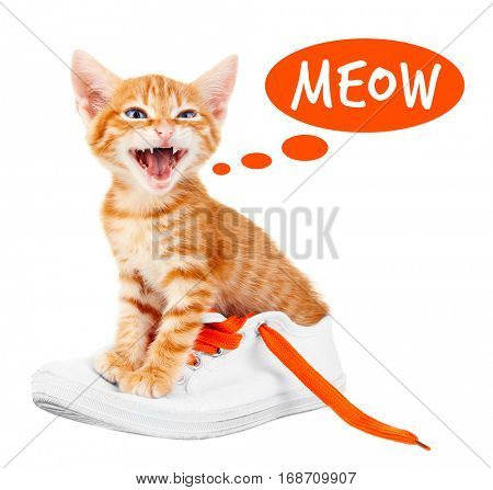 Cute kitten sitting in shoe and word MEOW on white background