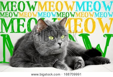 Cute cat lying on couch and word MEOW on background