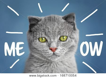 Cute cat and word MEOW on blue background