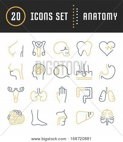 Set vector line icons sign and symbols in flat design anatomy with elements for mobile concepts and web apps. Collection modern infographic logo and pictogram.