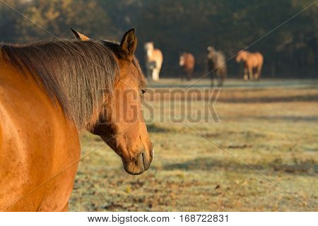 Horse napping in early morning sun, with the rest of the herd facing her in the distance