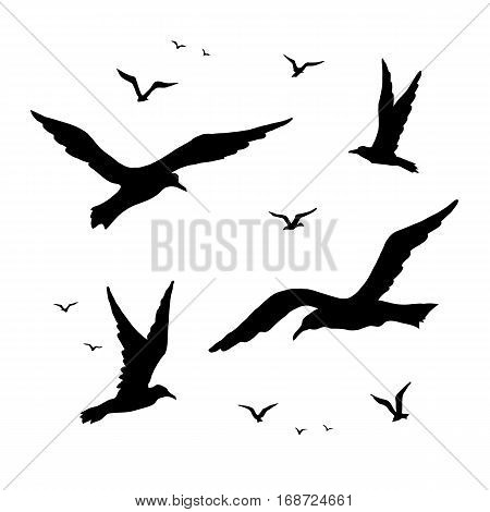 Seagulls vector silhouette set drawing by hand. Birds in flight are isolated.